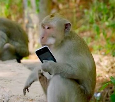 monkey-phone.jpg.662x0_q70_crop-scale
